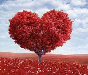 Frases de Amor Sabias e Inteligentes
